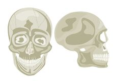 Two human skulls Stock Image