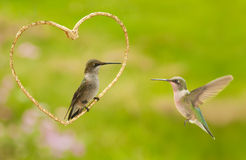 Two hummingbirds with a golden heart. A Valentine design on a green garden background Royalty Free Stock Images