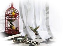 Two Hummingbirds Indoors Stock Image