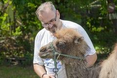 Two-humped тренировка верблюда (bactrianus Camelus) Стоковое Изображение RF