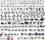 Two hundred animal vector illustrations. Two hundred 200 animal vector illustrations Stock Photos