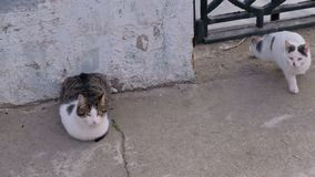 Two hungry cats. Are waiting for fishermen`s catch stock video footage
