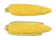 Two husked cobs of sweet corn, isolated, over white Stock Photo