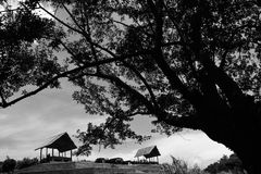 Two huts with frame of big tree on fore ground royalty free stock images