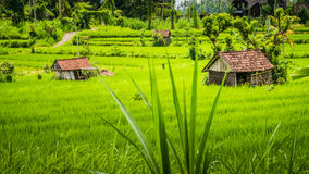 Two huts in Lush green Rice tarrace in Sidemen, Bali, Indonesia.  Royalty Free Stock Photography