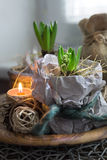 Two hyacinth plants in wrapping paper and a candle Stock Photo