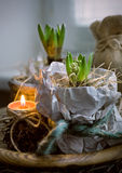 Two  hyacinth in wrapping paper and a candle indoors Stock Photo
