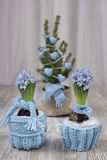 Two hyacinths and Christmas tree dressed warm for winter Royalty Free Stock Image