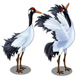 Two images of Japanese crane. Vector bird isolated Royalty Free Stock Photo
