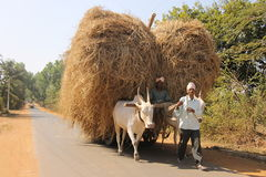 Two Indian village man on bullock cart. Two Indian village man are taking dry grass on bullock cart and passing through MK Hubli road near Hubli , India stock images