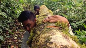 Two Indigenous Men Carrying A Log Through The Amazon Rainforest. Two Indigenous Men Carrying A Heavy Log Through The Amazon Rainforest stock video footage