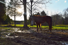 Two Inquisitive Horses. Two curious horses glance our way underneath atmospheric lighting and shade. Quite adorably, one horse pokes out her head to fix a Royalty Free Stock Photos