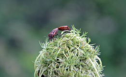Two insects on a plant Stock Photography