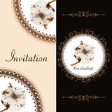 Two invitation card with blossom cotton Royalty Free Stock Images