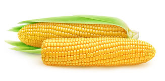 Two isolated corn ears Royalty Free Stock Photos