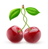 Two isolated sweet cherries with intertwined stems royalty free stock photos