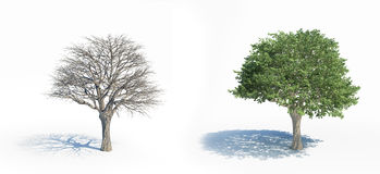 Two isolated trees Royalty Free Stock Photography