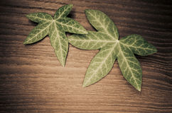 two ivy leaves on wood background Royalty Free Stock Photos