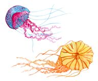 Two jellyfish hand drawn watercolor clip art
