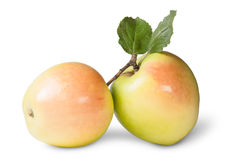 Two Juicy Apple With Green Leaf Stock Photography