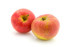 Two juicy apples Stock Image
