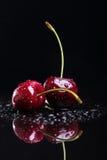 Two juicy fresh wet cherries Royalty Free Stock Photos