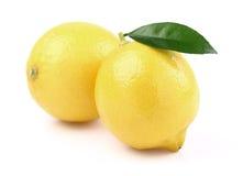 Two juicy lemons stock photos