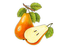 Two juicy pears Stock Images