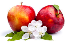 Two Juicy Red Apple and flowers Royalty Free Stock Photography