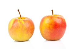 Two juicy red with yellow apples Royalty Free Stock Photography