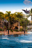 Two Jumping Dolphins 3. The dolphins of the Sea World Australia in the city of Gold Coast performing some awesome jumps royalty free stock image