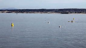 Two Kayaks Coming Into Frame On Monterey Bay California stock video footage