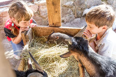 Two kids - boy and girl - taking care of domestic animals on far Stock Images
