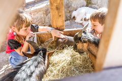 Two kids - boy and girl - taking care of domestic animals on far Royalty Free Stock Images