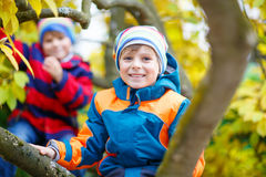 Two kids boys enjoying climbing on tree on autumn day. Stock Photography