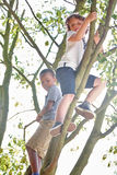Two kids climbing a tree Royalty Free Stock Images