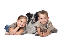 Two kids and a dog. Two kids and a border collie sheepdog in front of a white background royalty free stock image