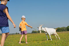 Two kids feed shegoat Royalty Free Stock Photos
