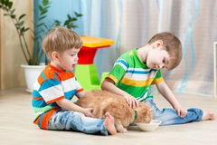 Two kids feeding cat indoors Stock Photography