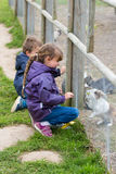 Two kids feeding rabbits Stock Photography
