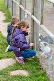 Two kids feeding rabbits Stock Photography