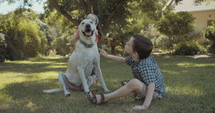 Two kids playing with a big white dog. Two kids petting and playing with a big white dog outdoors on the grass stock video