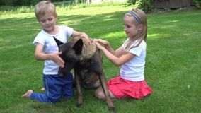Two kids playing with dog outdoors. Two kids playing with sheppard dog outdoors stock footage