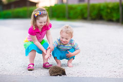 Two kids watching a hedgehog. Kids playing with a hedgehog. Children and pets. Little girl and adorable baby boy play with a wild animal. Preschooler watching