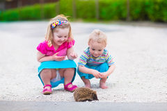 Two kids watching a hedgehog Stock Image