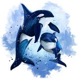 Two killer whales in the ocean. Watercolor painting. White background royalty free illustration