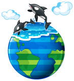 Two killer whales swimming in the sea Royalty Free Stock Photo