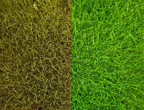 Two kind of green grass Royalty Free Stock Photography