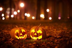 Two Kind Halloween Pumpkins in the park Stock Images