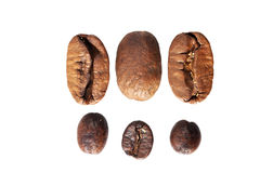 Two kinds of coffee: big and small beans Royalty Free Stock Photography